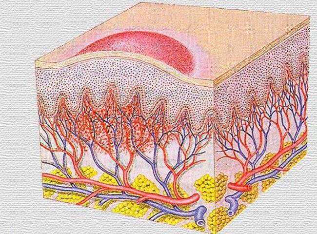 Suguelundite ja suuruste tuubid