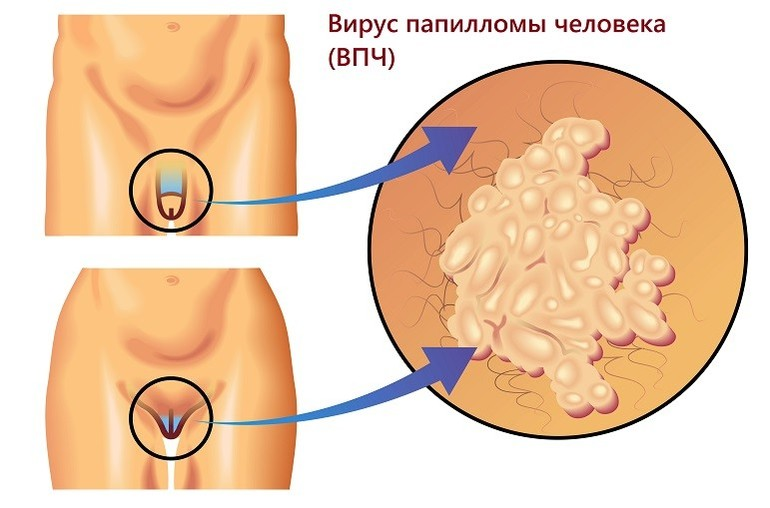 Vaadake suguelundite kujundeid ja suurusi Liikmete suurus on suurim